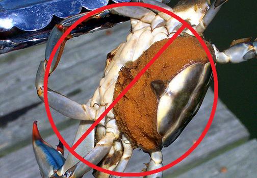 Crabbing rules and regulations crabbing hq for Crab fishing oregon