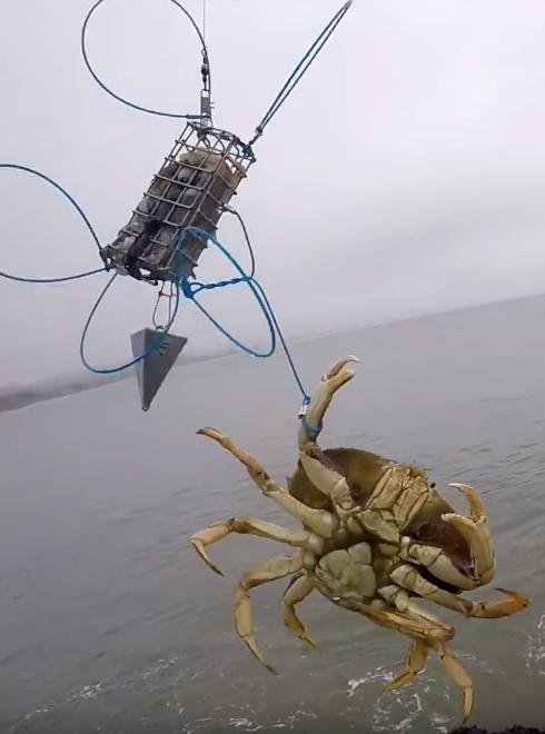 Crab Fishing Line Large